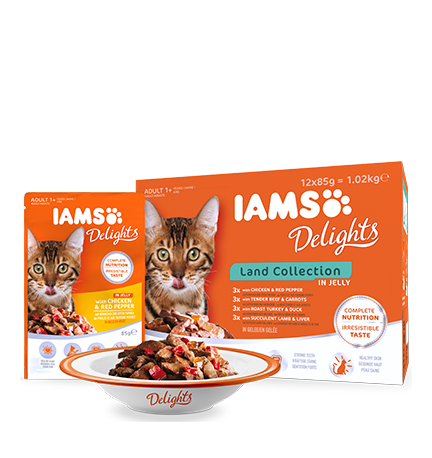 IAMS Delights Land Collection in Jelly